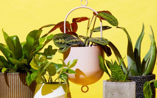 How to buy plants online? Tips For Novice Gardeners