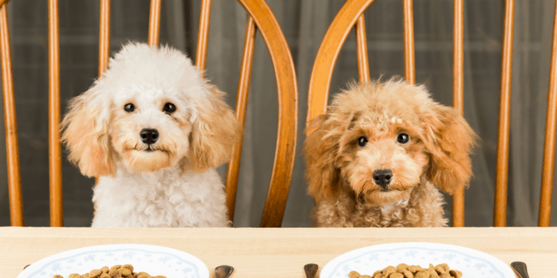 3 Tips For Picking The Best Pet Food For Your Dog