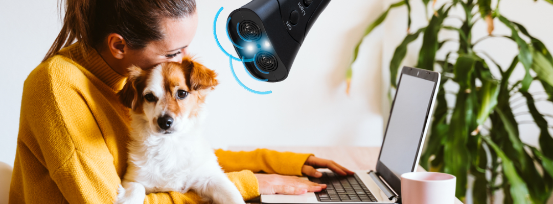 2021 Review: Train Your Dog Like A Pro From Home With BarxBuddy