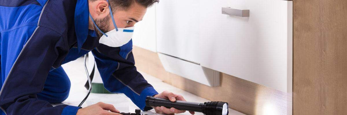 Pest Control Services in Austin – Recommendations For Preventive Actions